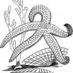 דף צביעה כוכב ים וצדפות
