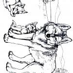 דף צביעה זאב 11