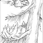 דף צביעה סקארט הסנאי משתובב
