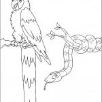 דף צביעה תוכי ונחש