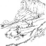 דף צביעה עזים רועות בהרים