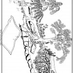 דף צביעה צמחיה באפיק הנחל