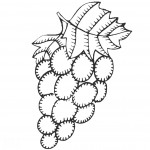 דף צביעה אשכול ענבים