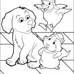 הברווזה והשפן שמחים לפגוש את הכלב
