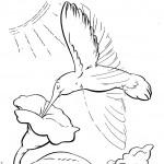 דף צביעה יונק הדבש