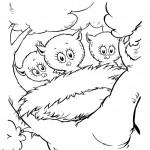 שלושה גוזלים בקן הציפור