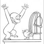 ג'ורג' הסקרן מתלהב מהמפגש עם הציפור