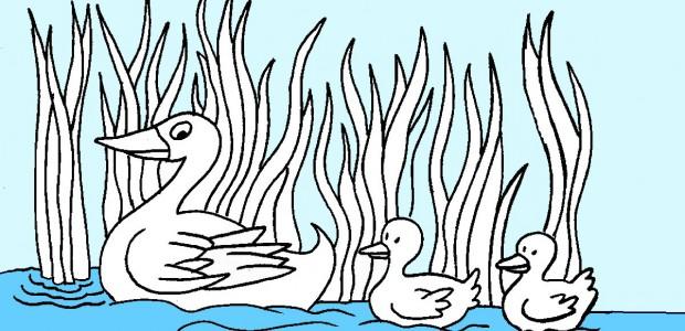 לחצו על דפי הצביעה של ברווזים להגדלה ולהדפסה