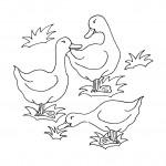 דף צביעה מפגש בין ברווזים