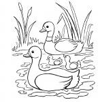 דף צביעה משפחת ברווזים שטה באגם