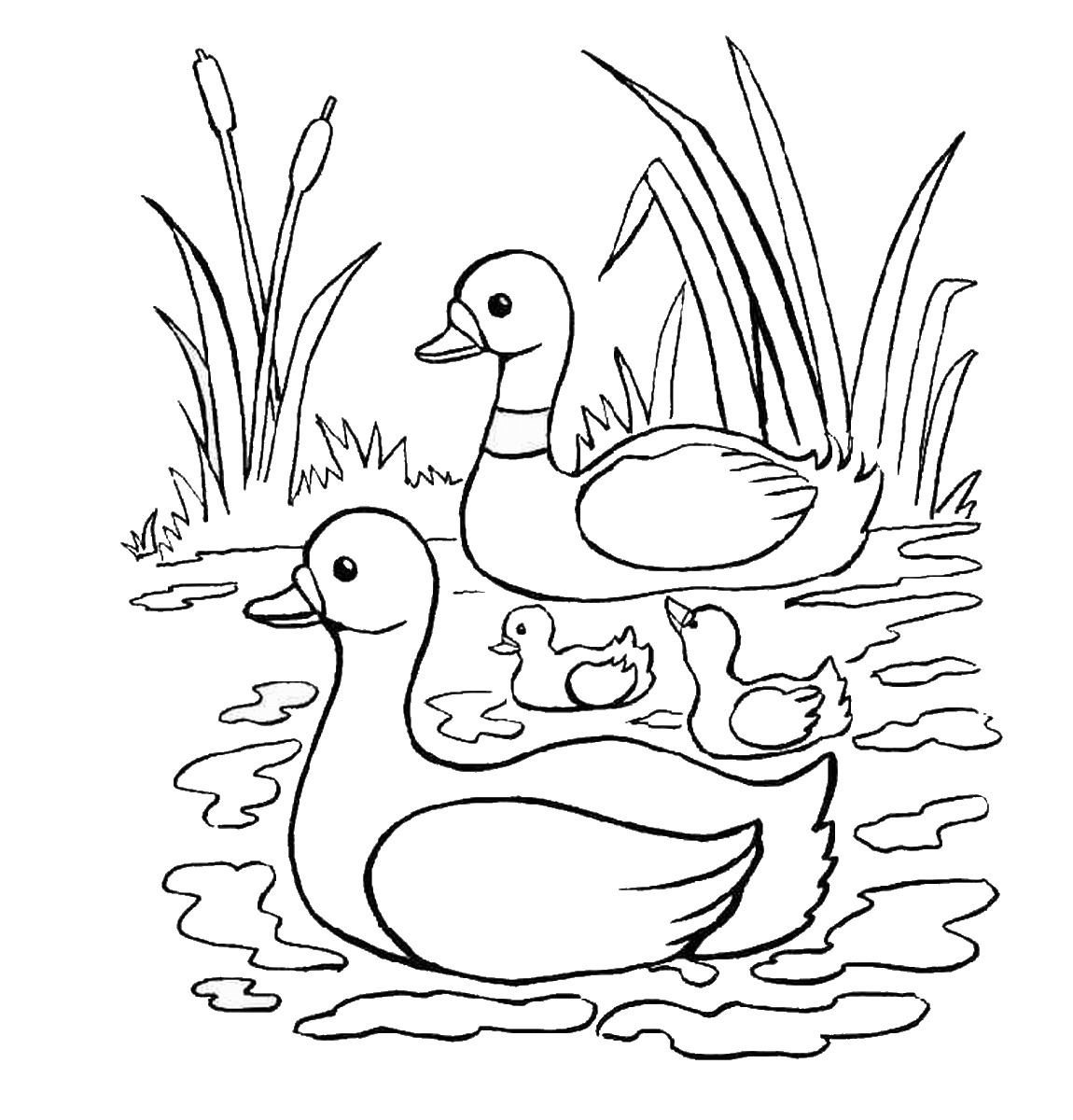 for Ducks coloring pages