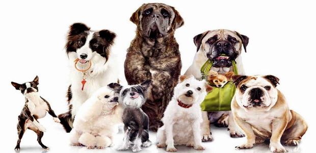 לחצו על דפי הצביעה של בית מלון לכלבים להגדלה ולהדפסה
