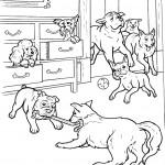הכלבים משחקים בחדר המלון