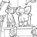 ייבוש הפרווה לכלבים לאחר המקלחת
