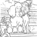 שני כלבים נהנים בישיבה על הספסל