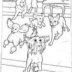 הכלבים משתוללים במלון