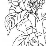 דף צביעה ג'ק מטפס על גבעול האפונים 1