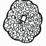 דף צביעה מספר 0 בעיטור עיגולים