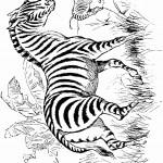 דף צביעה זברות בטבע