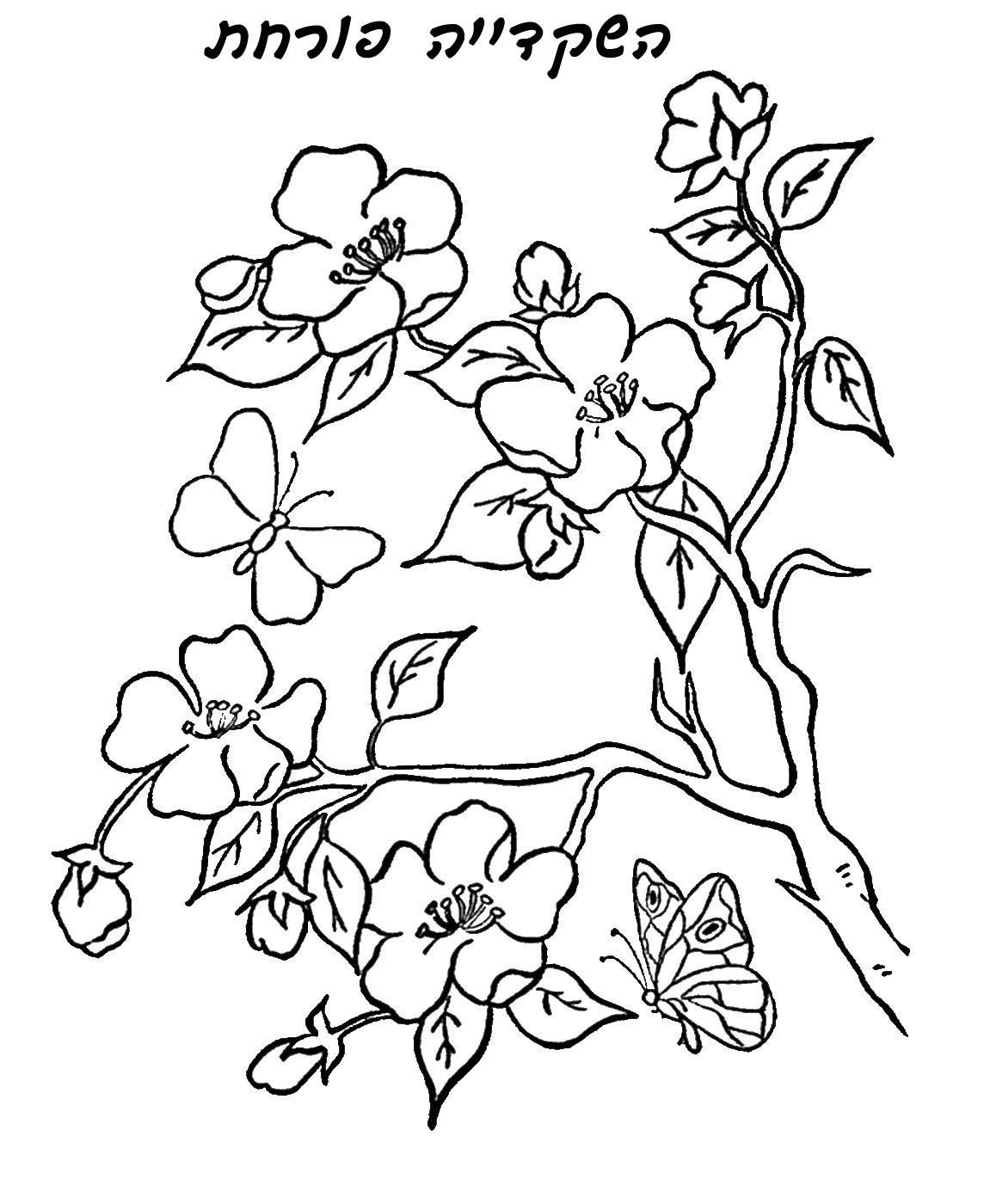 Tu Bshevat Coloring Pages Sketch Coloring Page Tu B Shevat Coloring Pages