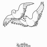 דף צביעה היונים קרלו וקרלה