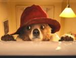 כנסו לדפי צביעה של הדוב פדינגון הדוב פדינגטון סרטון לצפייה ישירה סיפורו המפורסם של דוב מתוק וחכם שמגיע מהג'ונגלים של פרו לעיר לונדון ונקלע להרפתקאות שונות ומשונות. עם הגעתו לתחנת […]
