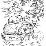 beaver_coloring_13