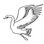 swan-coloring-5