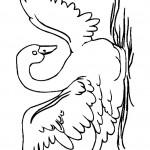swan-coloring-9