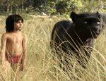 צפו בסרטוני הסרטספר הג'ונגל2016 לחצו על דפי הצביעה של ספר הג'ונגל להגדלה ולהדפסה
