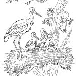 storks-coloring-2